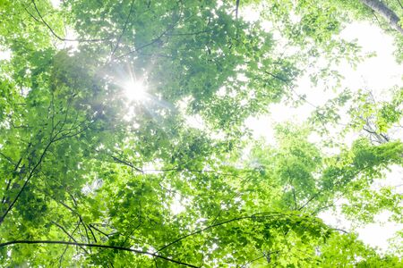 tranquillity: Back Lit, Backgrounds, Beauty In Nature, Branch, Bright, Colour Image, Day, Directly Below, Green, Growth, Horizontal, Lens Flare, Nature, No People, Outdoors, Photography, Scenics, Sky, Sunbeam, Sunlight, Sunny, Tranquil Scene, Tranquillity, Tree, Tree C Stock Photo