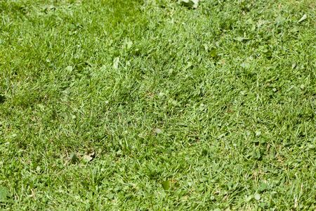 grass area: Backgrounds, Close-up, Colour Image, Day, Differential Focus, Full Frame, Grass, Grass Area, Green, Growth, Horizontal, Nature, No People, Outdoors, Photography