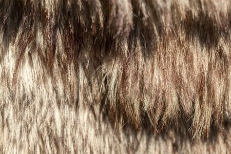 consumerism: Animal Hair, Brown, Full Frame, Backgrounds, Animal Colour, Animal Themes, Outdoors, Day, Textured, Close-up, Animal Body Part, Part Of, Colour Image, Photography, No People, Horizontal, One Animal, Flea Market, For Sale, Retail, Consumerism Stock Photo