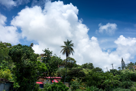 colour image: Beauty In Nature, City, Cloud - Sky, Colour Image, Day, Environment, Forest, Green, Growth, Horizontal, Nature, No People, Outdoors, Photography, Scenics, Sky, Tranquil Scene, Tranquillity, Travel, Travel Destinations, Tree, Trinidad - Trinidad And Tobago