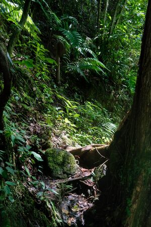 colour image: Awe, Colour Image, Day, Environment, Fern, Forest, Green, Growth, Lush, Majestic, Nature, No People, Non-urban Scene, Outdoors, Photography, Plant, Rock, Root, Sunlight, Tranquil Scene, Tranquillity, Tree, Tree Trunk, Trinidad - Trinidad And Tobago, Trini