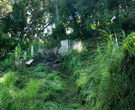 No People, Trinidad And Tobago, Trinidad - Trinidad And Tobago, Growth, Non-urban Scene, Photography, Green, Forest, Horizontal, Plant, Day, Outdoors, Tranquillity, Tranquil Scene, Nature, Colour Image, Beauty In Nature, Scenics, Grass, Built Structure, I Stok Fotoğraf