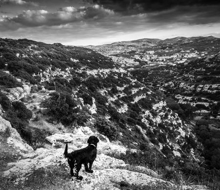Alert dog on mountain in Crete; Greece