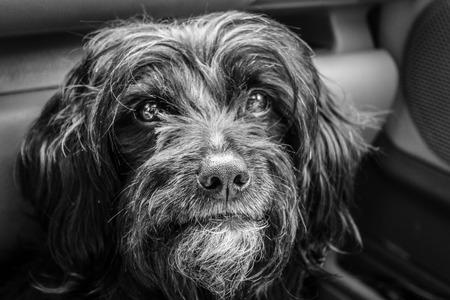 Close-up of Gos datura dog