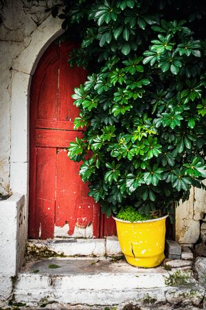 Potted plant outside closed door of house