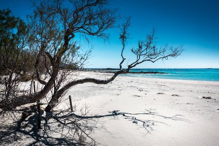 Bare tree on seashore by blue sea water Reklamní fotografie
