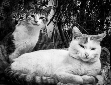 Portrait of three cute cats