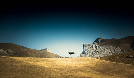Tree growing in the middle of an empty dry field Banco de Imagens