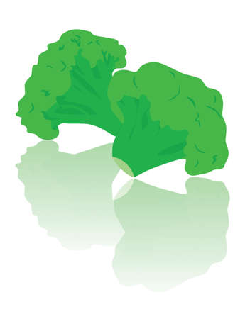 Vector illustration of two pieces of brocolli, reflected on surface