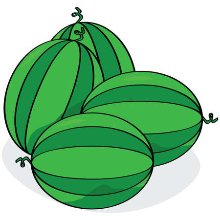 Cartoon illustration of four watermelons laid out together on the floor Vector