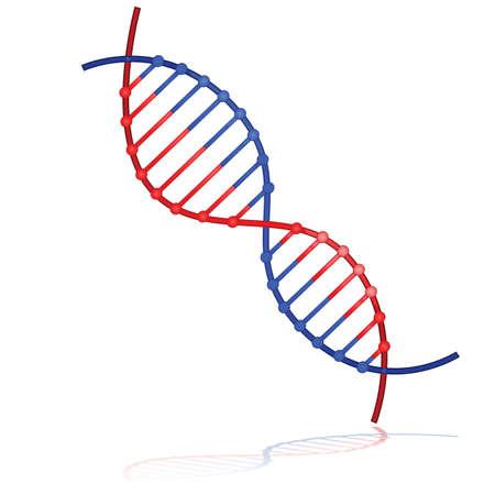白い背景の上に反映される DNA 鎖を示す光沢のある図