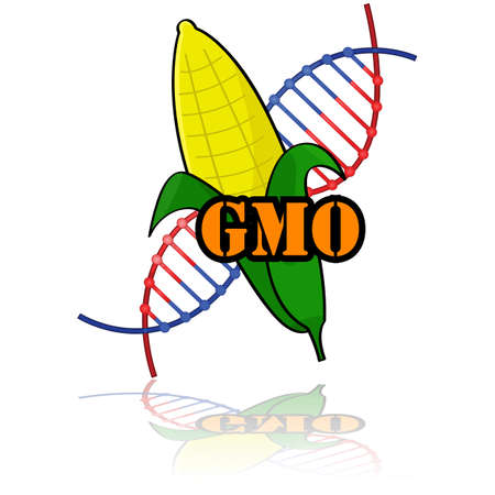 genetically: Concept illustration showing a genetically modified corn combined with the letters GMO and a DNA strand