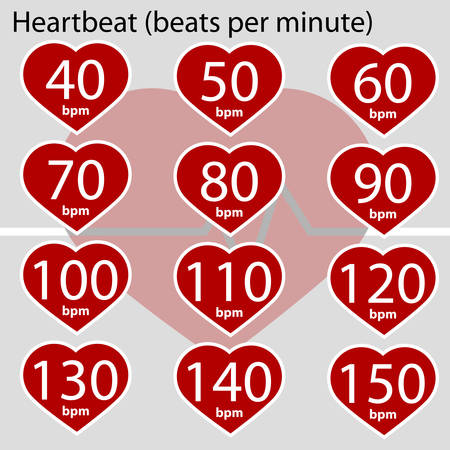 Infographic showing a heart and different values for heart beats per minute