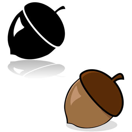 acorn tree: Drawing of an acorn in color and black and white