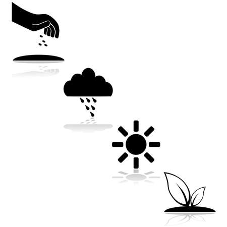 seeding: Icon set showing the steps needed for a plant to grow, with seeding, rain and sunshine