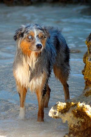 bermuda: Bermuda Dog Standing in Water