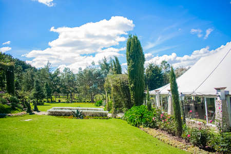 beautiful big garden with grass and flowers with blue sky