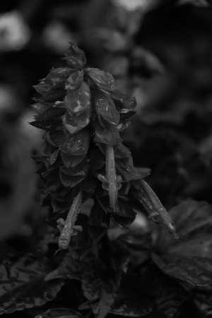 san marino: San Marino Flowers XII