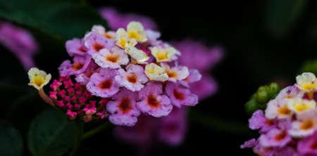 sammarinese: San Marino Flowers VII
