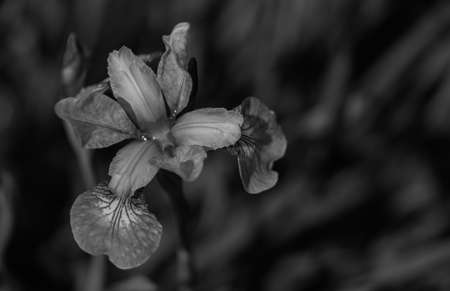rosengarten: Pansy in Rosengarten II Stock Photo