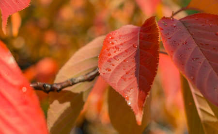 Citadelpark Red Leaves Closeup