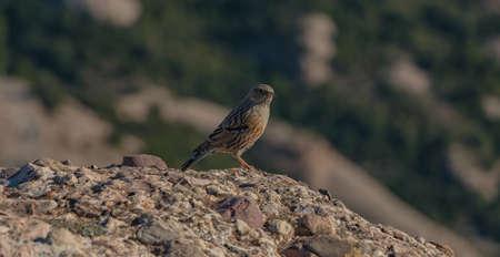 Sparrow I Stock Photo
