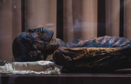 A picture of a mummified body taken inside the Hermitage museum  (2018). Фото со стока