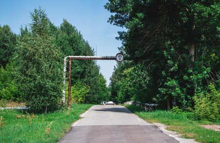 A picture of a Chernobyl street surrounded by lavish vegetation.