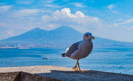 A picture of a seagull posing for the camera with Mount Vesuvius in the back. Stock Photo