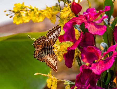 A picture of a butterfly resting on a flower in Viennas Butterfly House. Banco de Imagens
