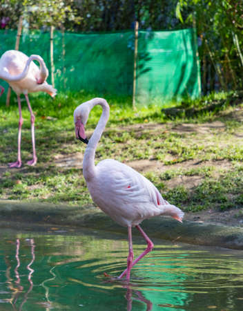 A picture of a Pink Flamingo at the Kraków Zoo.
