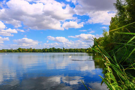 Close-up of a beautiful mute swan on a lake.