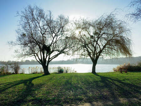 Winter scene in the countryside. View of two trees without foliage by a lake. Shadows of the trunks on the lawn. 版權商用圖片
