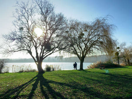 Winter scene in the countryside. View of two trees without foliage by a lake. Shadows of the trunks on the lawn. Couple contemplating the landscape.