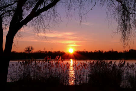 Beautiful sunset or sunrise with view on a lake. Rural scene with silhouette of weeping willow in the foreground. Reflection of the sunlight in the water.