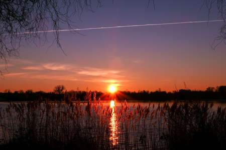 Beautiful sunrise over the water with pampas grass and reeds in the foreground. Sunlight and reflection of rays in a lake. Silhouette of a forest in the background.