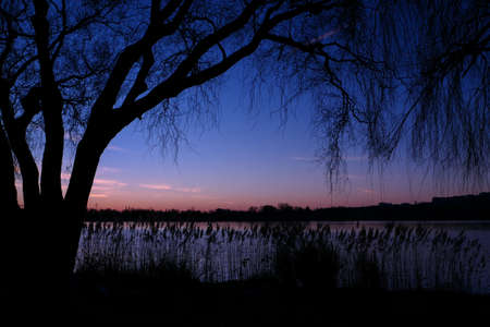 Beautiful sunset or sunrise with view on a lake. Rural scene with silhouette of weeping willow in the foreground.