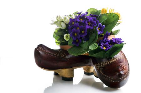 planter: Clog shoe in white background Original