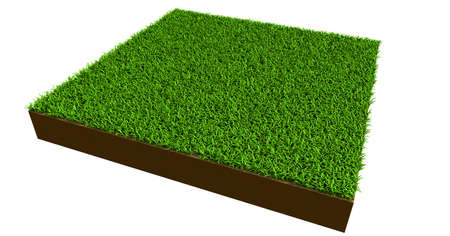 piece of grass on white background