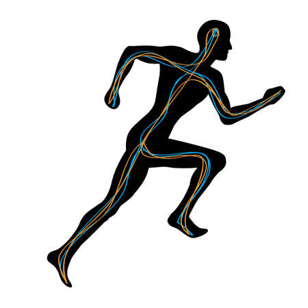 neurona: Hombre corriendo con dos v�as de conexi�n de cerebro a los m�sculos  Vectores