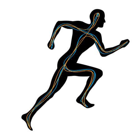 Mann mit zwei Pfade verbinden Brain zu Muskeln ausf�hren