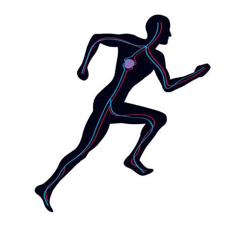 ambos: Hombre corriendo mostrando ambos sistemas vascular arterial