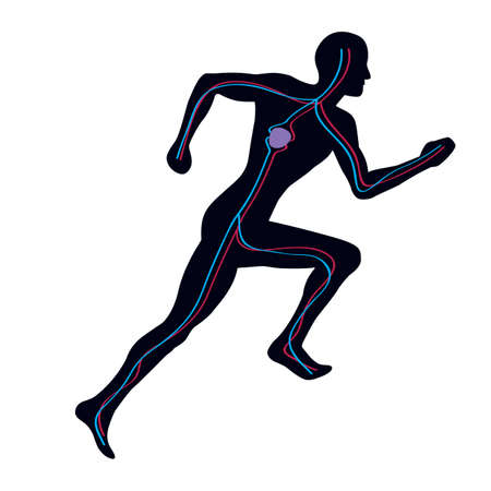 both: Man Running Showing Both Vascular Blood Systems Illustration