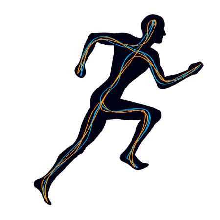 nerves: Hombre corriendo con dos v�as de conexi�n de cerebro a los m�sculos  Vectores