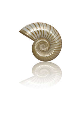 nautilus shell: 3D Rendering of Sea Shell With Copy Space