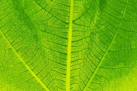 backlight: Green Leaf Detail Close-up Vector Illustration Illustration