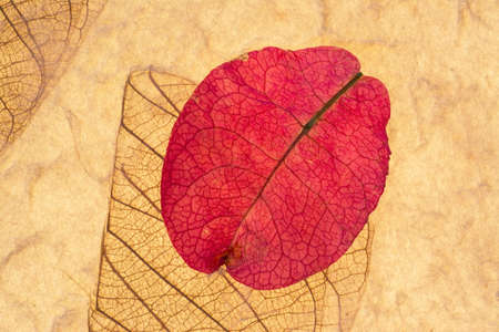yellow ochre: Pink Petal and Leaf Pressed On Recycled Paper Horizontal Background Stock Photo