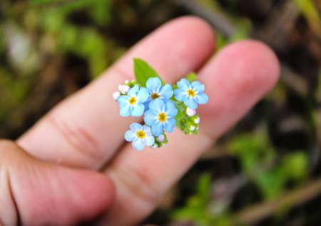 Light-Blue Flowers Фото со стока