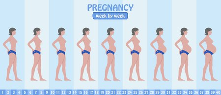 Week by week pregnancy stages of pregnant woman with pants. All the objects and body stages are in different layers and the text types do not need any font. Ilustração