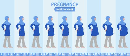 Week by week pregnancy stages of pregnant muslim woman with islamic Clothing. All the objects and body stages are in different layers and the text types do not need any font.